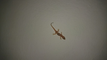 The lizard that lives under a painting in the hotel