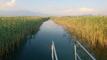 A narrow passage through the reeds